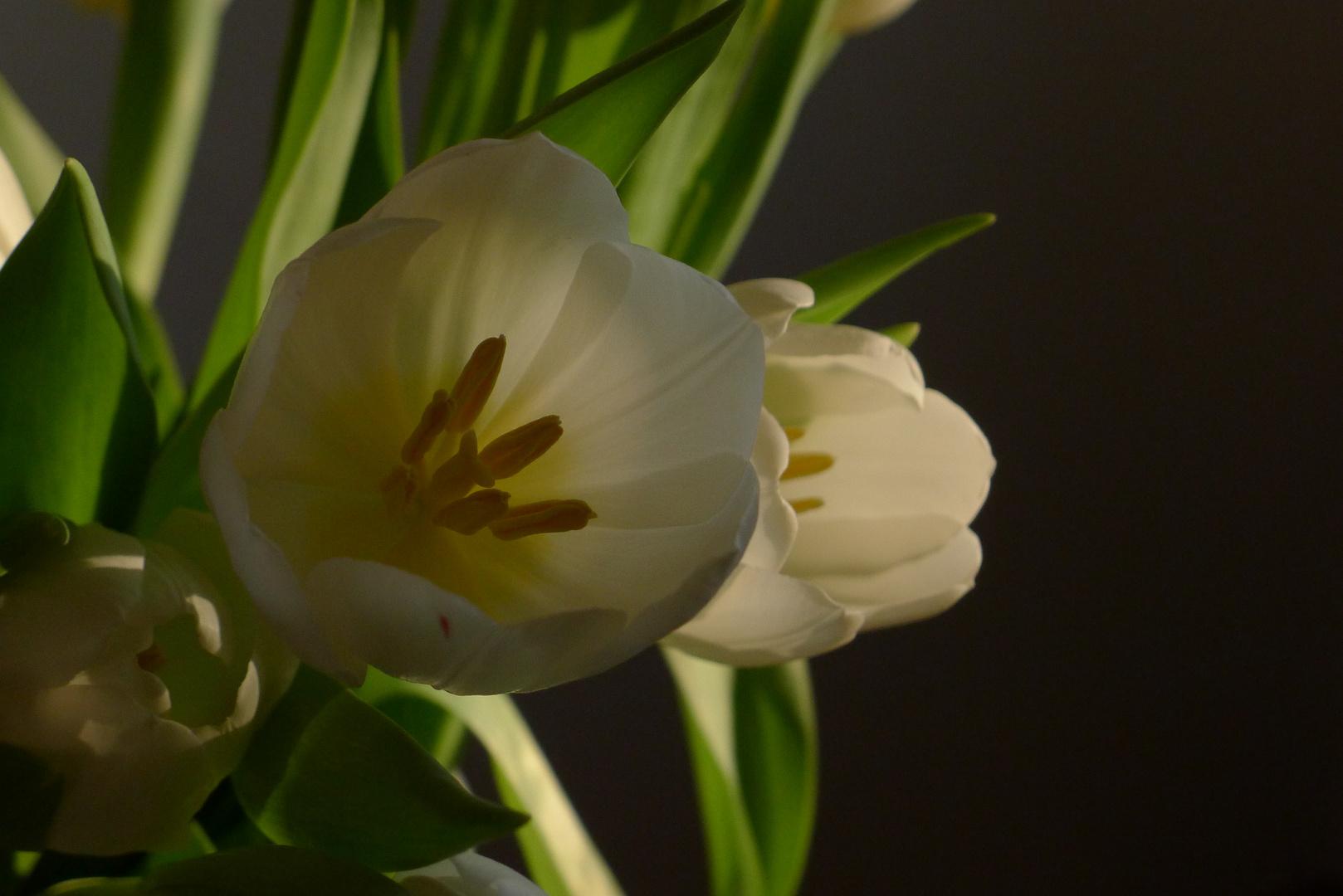 Vorboten des Frühlings (1)
