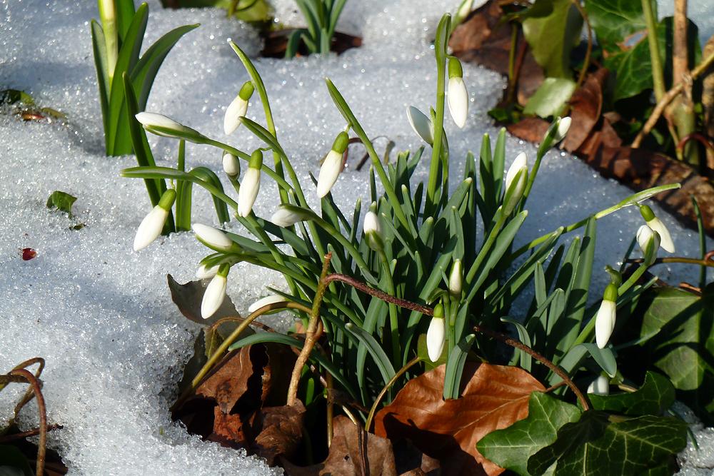 Vorboten des Frühlings 2