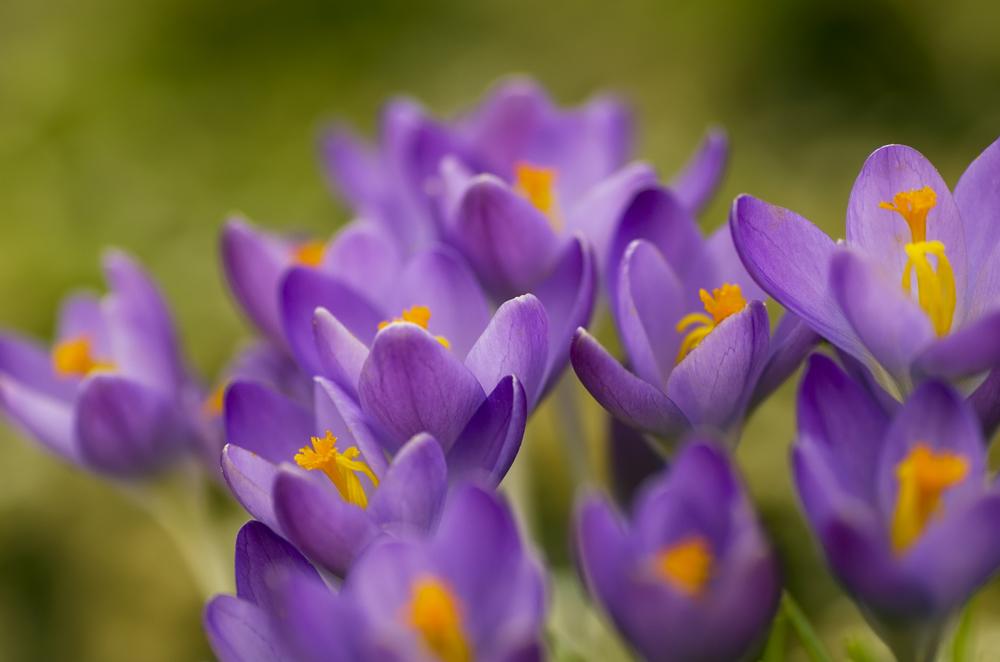 Vorboten des Frühlings ...