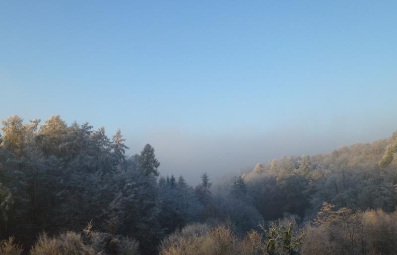 Vorboten des Spessartwaldes im Winterkleid
