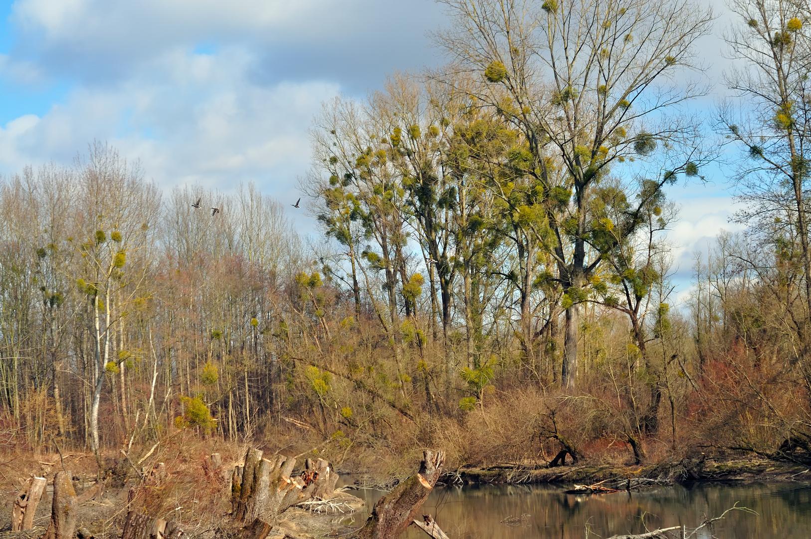 Vorfrühling im Auwald