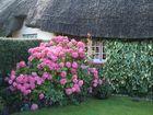 Vorgarten in Adare (Irland)