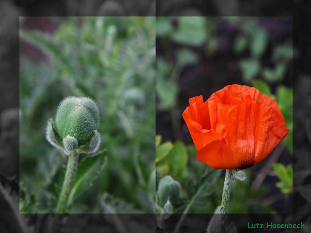 Vorher und Nachher