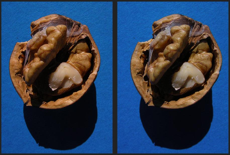 vorjährige Walnuss, frisch geknackt, mit Mehl-Motten-Made