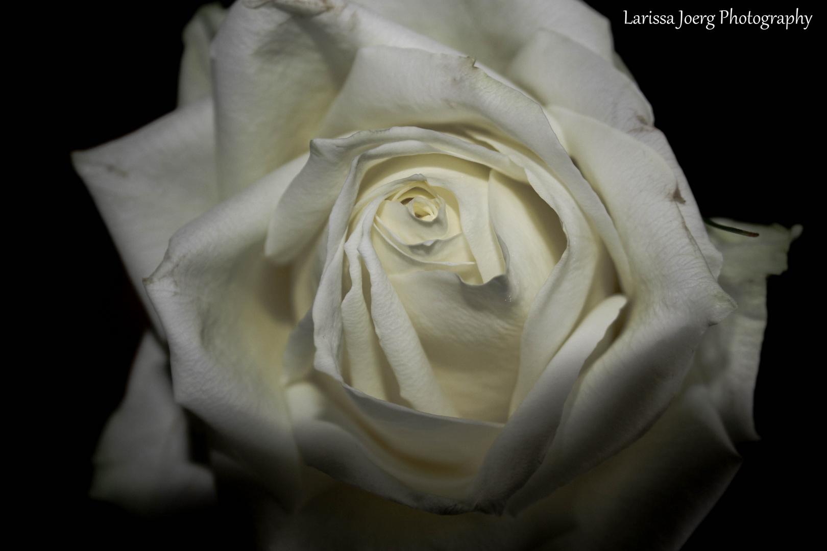 vorletzten Samstag hab ich nen Strauß voll Rosen bekommen