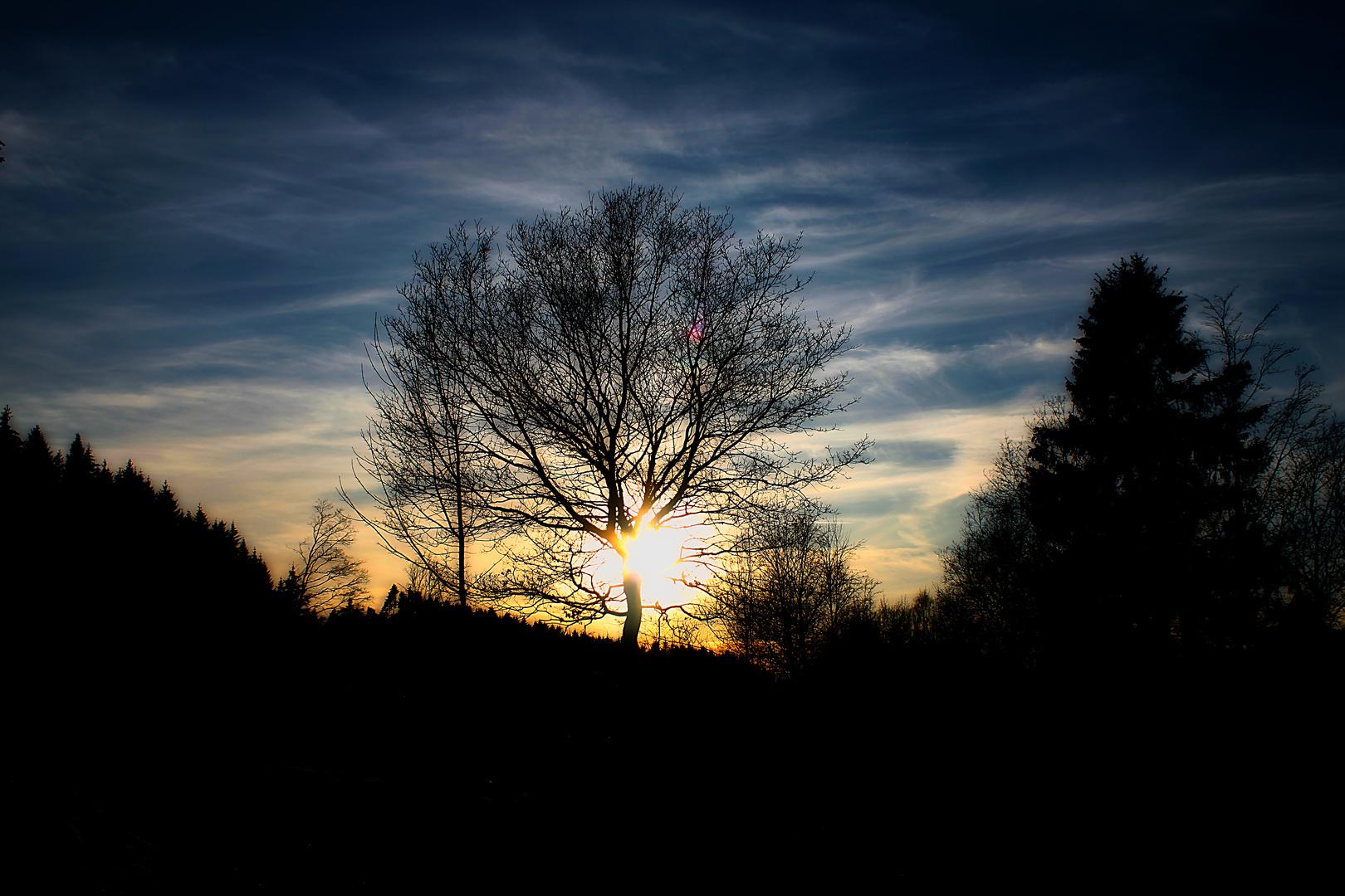 Vor´m untergeh´n nen Baum zerscheiden