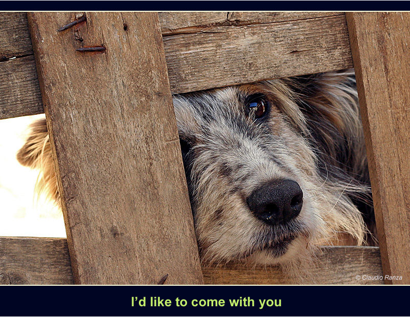Vorrei venire con te