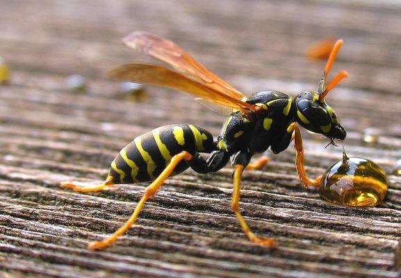 Vorschau 2 ( Honigschlecken )