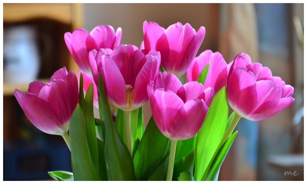 Vorschau auf den Frühling....