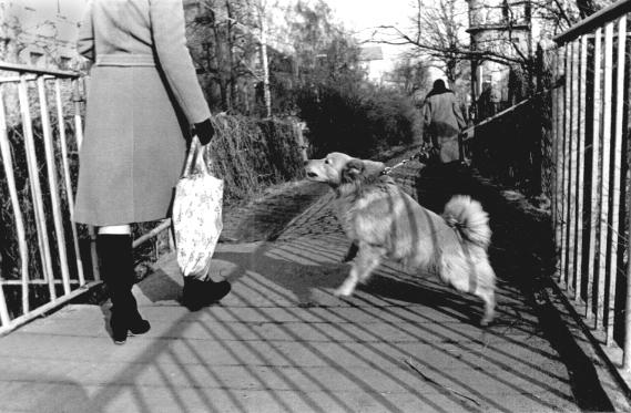 Vorsicht, bissiger Hund
