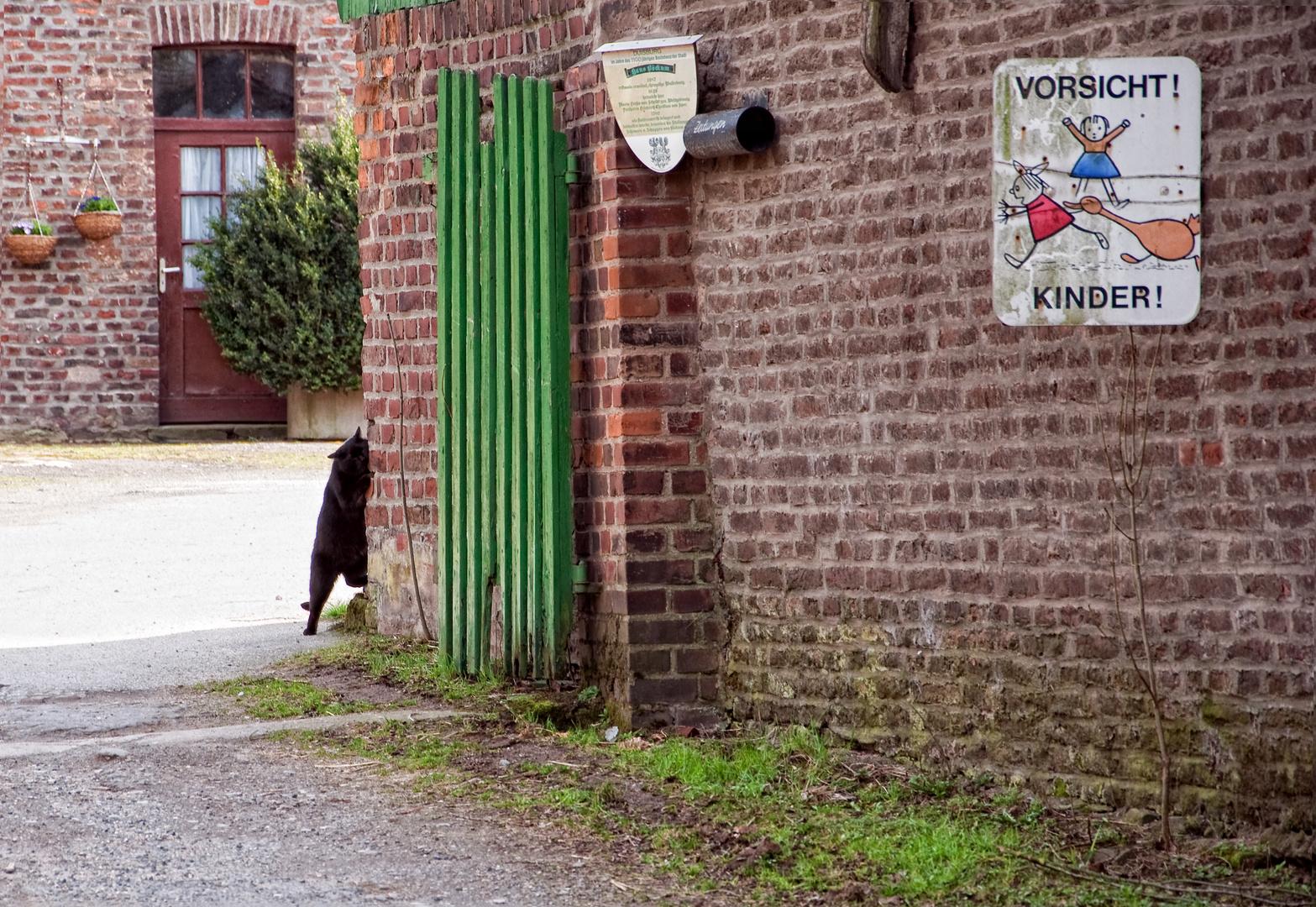"""""""Vorsicht Cat"""""""