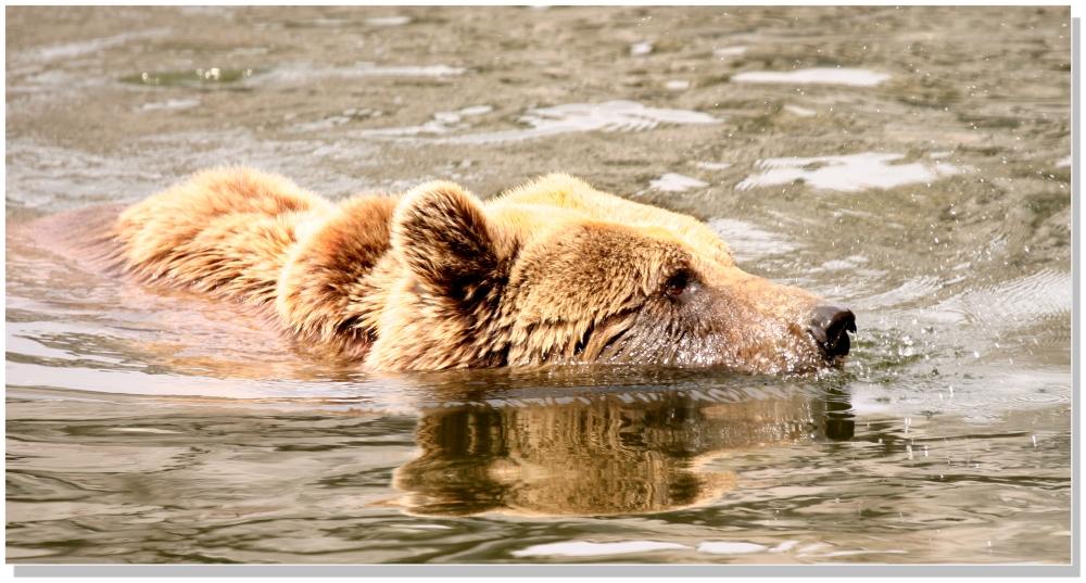 vorsicht, ich bin kein Karpfen sondern ein Bär 1v3