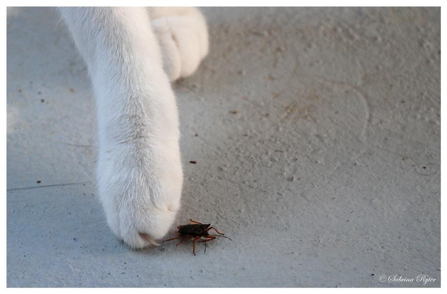 Vorsicht, kleiner Käfer die sind scharf!