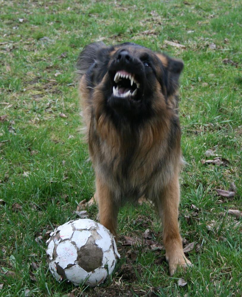 Vorsicht mein BALL!!!!!!