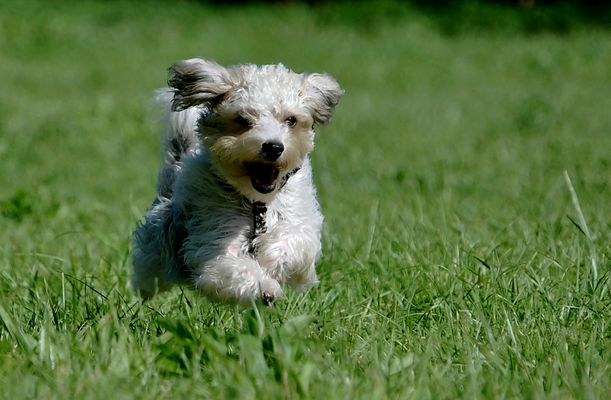 Vorsicht....fliegender Hund !