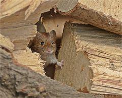 Vorsichtig schob Mausi den Holzscheit auf Seite....