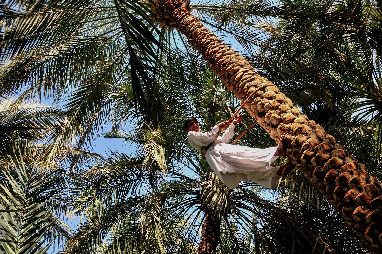 Vorturner - Dubai # 07