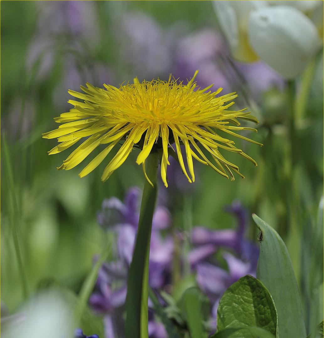 Vorwitziger Eindringling im Blumengarten