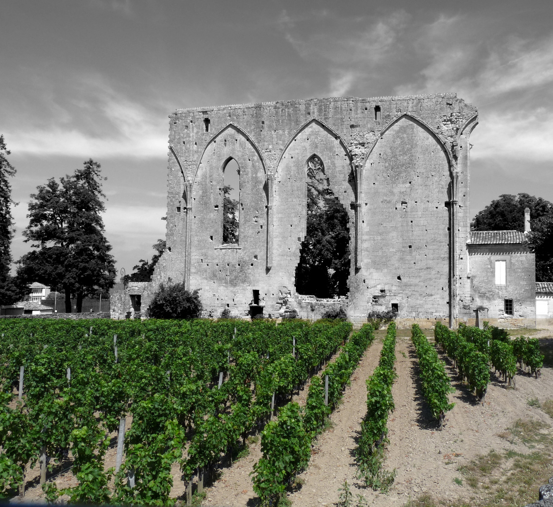 Voyage au pays du vin