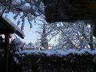 vue de mon jardin