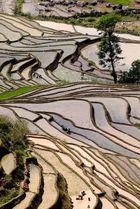 vue des rizières près de Yuang Yuang