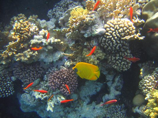 """Vue """"générale"""" de l'immense aquarium naturel qu'est la Mer Rouge"""