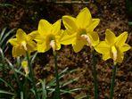 Vue printanière arrière -- Rückansicht im Frühling