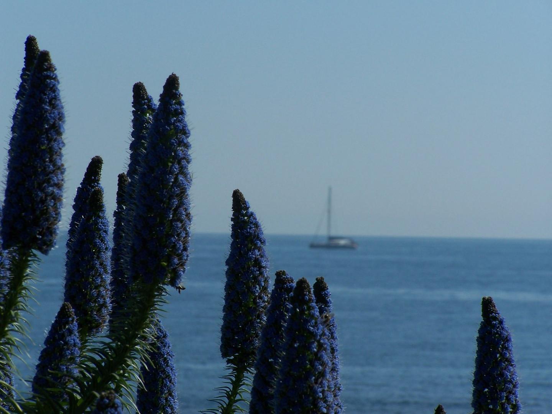 Vue sur mer au Cap d'Ail