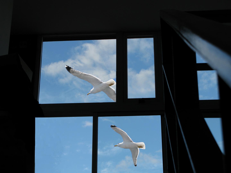 Vuelo cruzando una ventana al cielo.