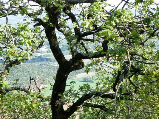 vues du Mont de Savasse
