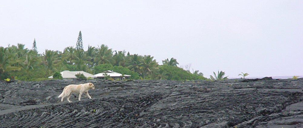 Vulkan-Hund