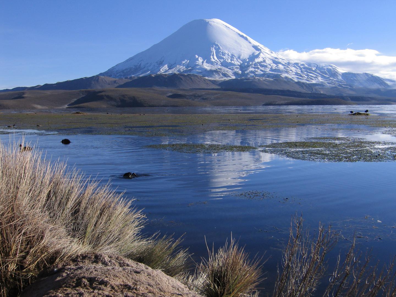 Vulkan Parinacota 6348m und Laguna Chungara