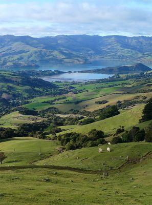 Vulkanische Traumlandschaft - Akaroa / Banks Peninsula / Neuseeland