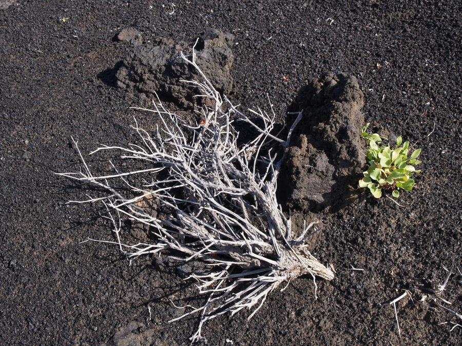 Vulkanismus und Vegetation - La Palma