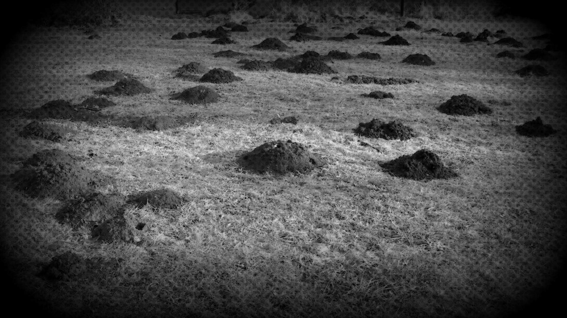 Vulkanlandschaft???