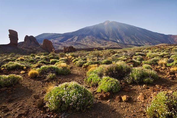 Vulkanlandschaft mit Teide auf Teneriffa