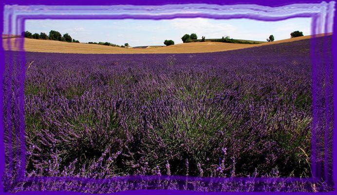 W la Provence!!!!!
