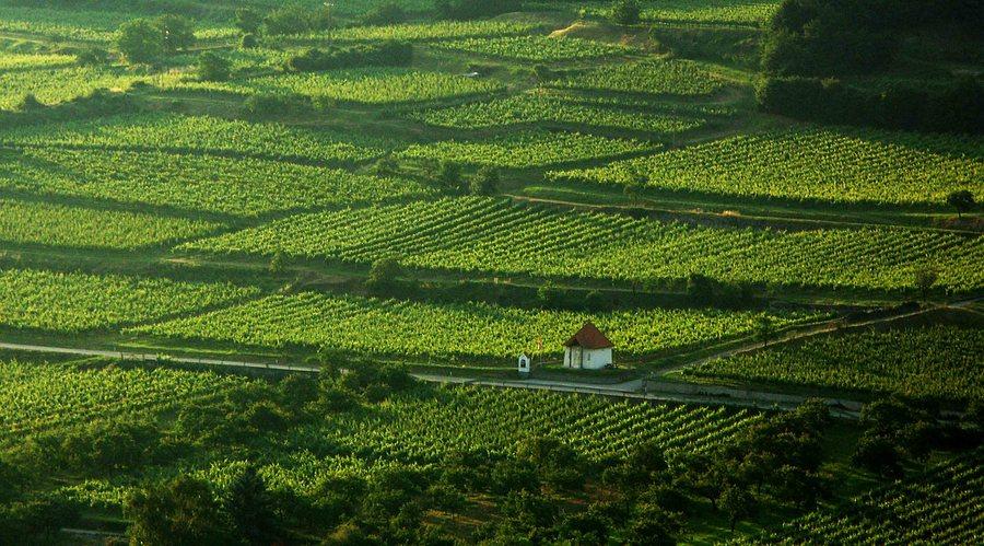 Wachauer Weinlandschaft