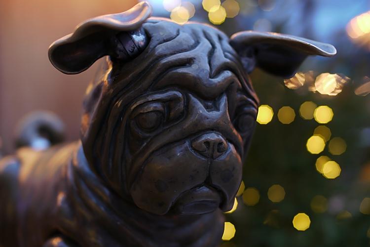 Wachhund auf dem Weihnachtsmarkt