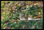Wachsammer Gepard