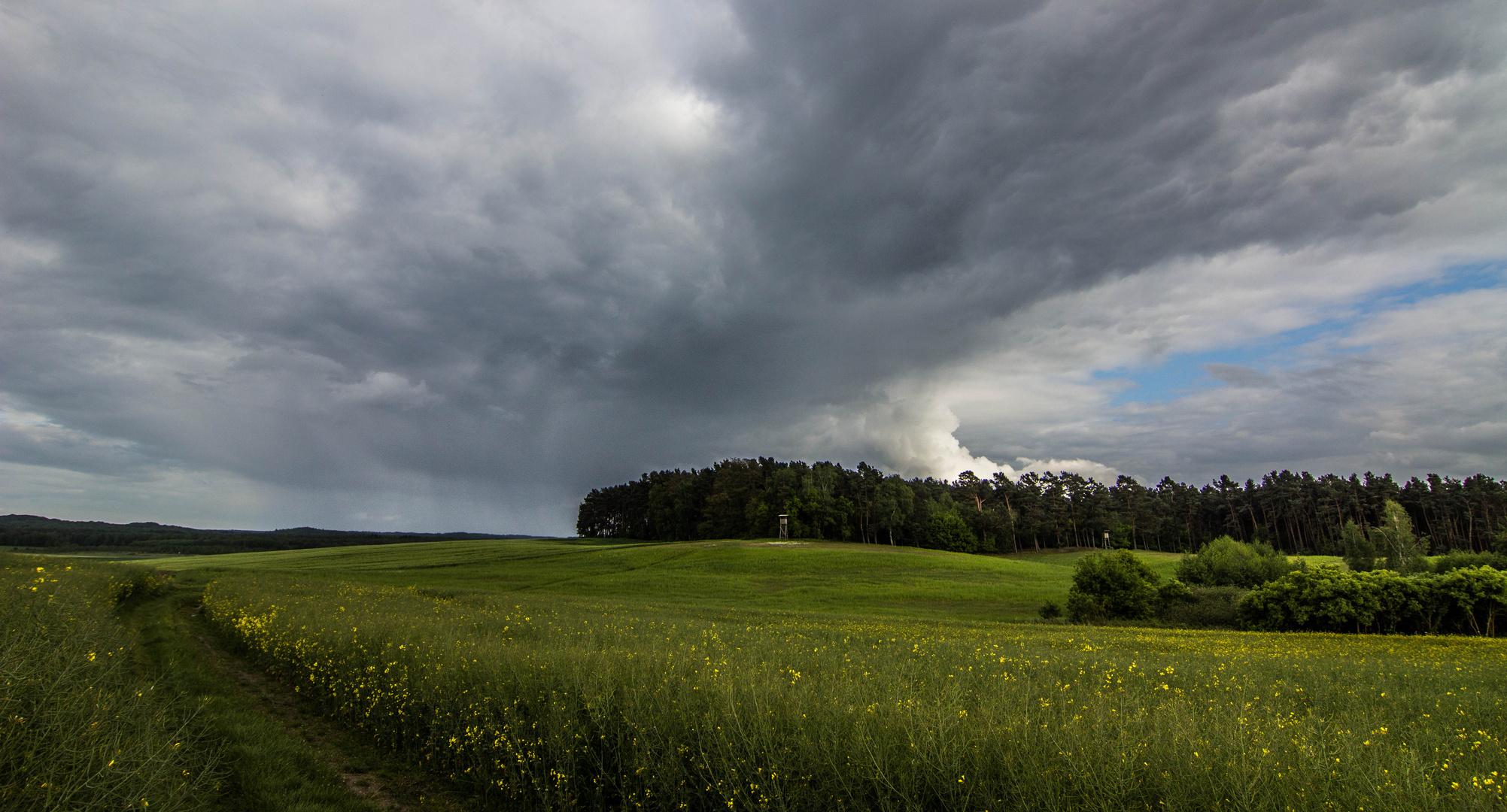 Wachse - Wetter