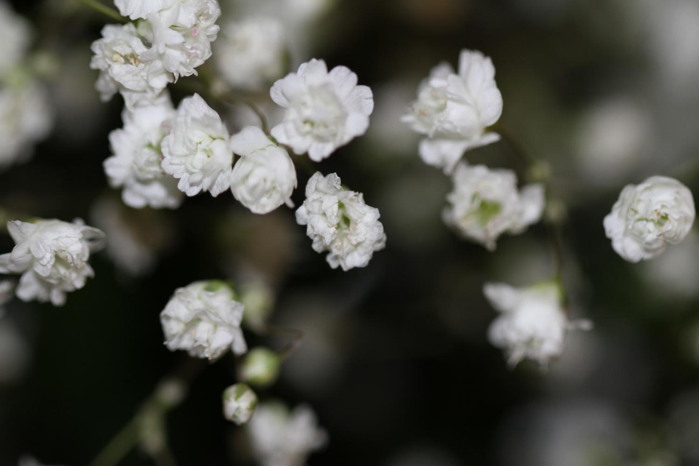 Wachstum des Weisses