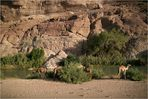Wadi Massilah II