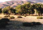 Wadi (Trockental) in der südsibirischen Steppe