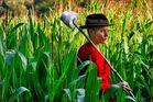 Wächst im Kornfeld mal der Mais, hat die Landfrau Platz genug.....