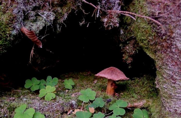 Wächter am Höhleneingang