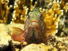 Wächter der Korallen