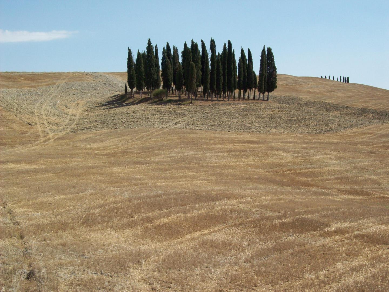 Wäldchen umgeben von geernteten Feldern in der Toskana