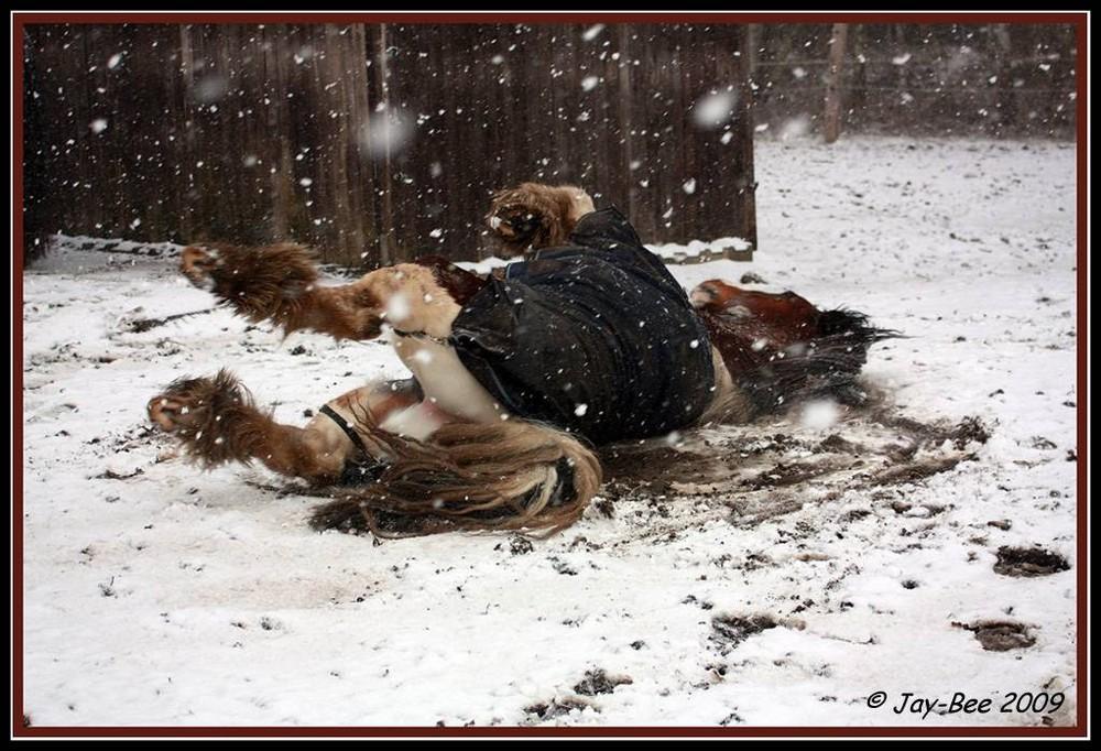 wälzen im Schnee...