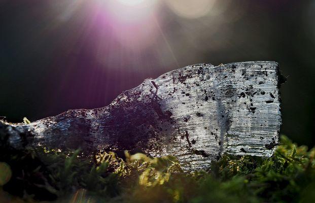 Wärmende Lichtstrahlen berühren das Kammeis! - Aiguilles de glace touchées par le soleil.